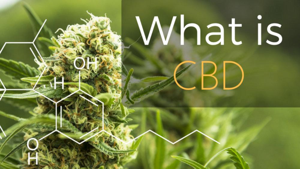 CBD Oil for Mental Health—Should You Take It Too?