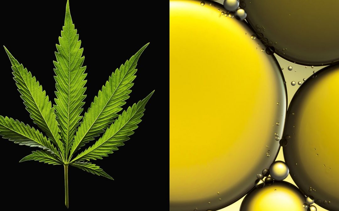 Pop Culture Says CBD Cures Everything—Here's What Scientists Say
